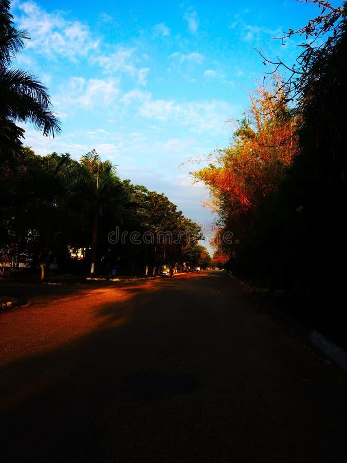 Belle vue de parc et autour de l'arbre photo stock