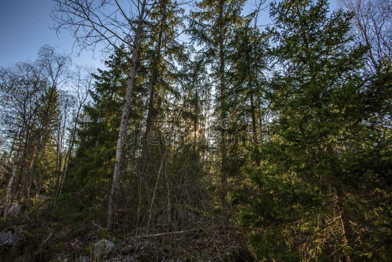 Belle vue de paysage rocheux de nature Fond vert de Forest Trees On Blue Sky Printemps magnifique images libres de droits