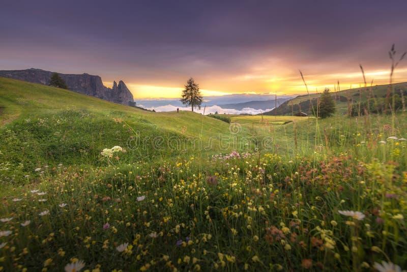 Belle vue de paysages d'arbre et de collines vertes sur le coucher du soleil d'été des dolomites de Seiser Alm, Italie photos stock
