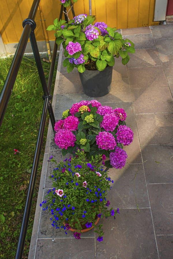 Belle vue des fleurs de pot en dehors de maison Éléments colorés de décoration pour l'extérieur photo stock