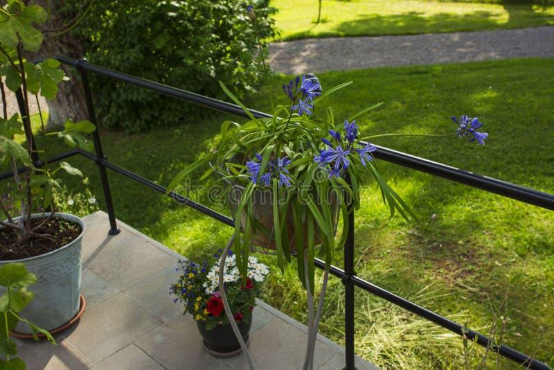 Belle vue des fleurs de pot en dehors de maison Éléments colorés de décoration pour l'extérieur image stock