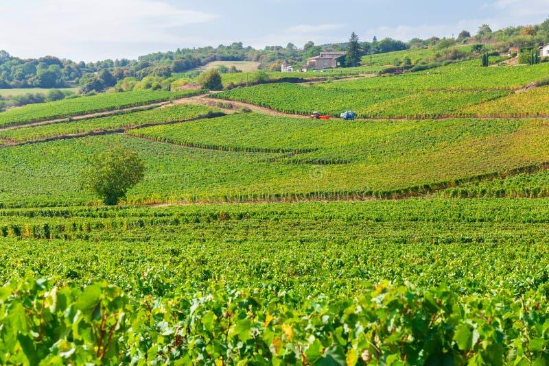 Belle vue des vignobles en Bourgogne, France photo stock