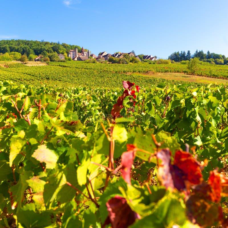 Belle vue des vignobles en Bourgogne, France images stock