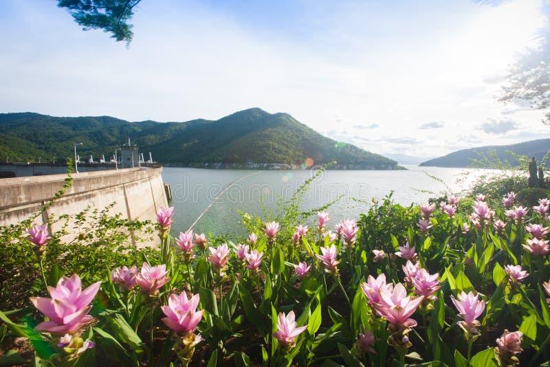 Belle vue du barrage de Bhumibol au jour de soleil, Siam Tulip o photo stock
