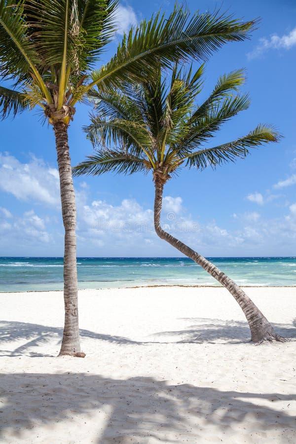 Belle vue et paumes de mer sur la plage photos stock
