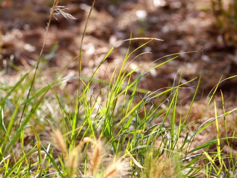 Belle vue sur l'herbe verte dans le jardin, plan rapproché Une partie du champ pour obtenir les détails images libres de droits