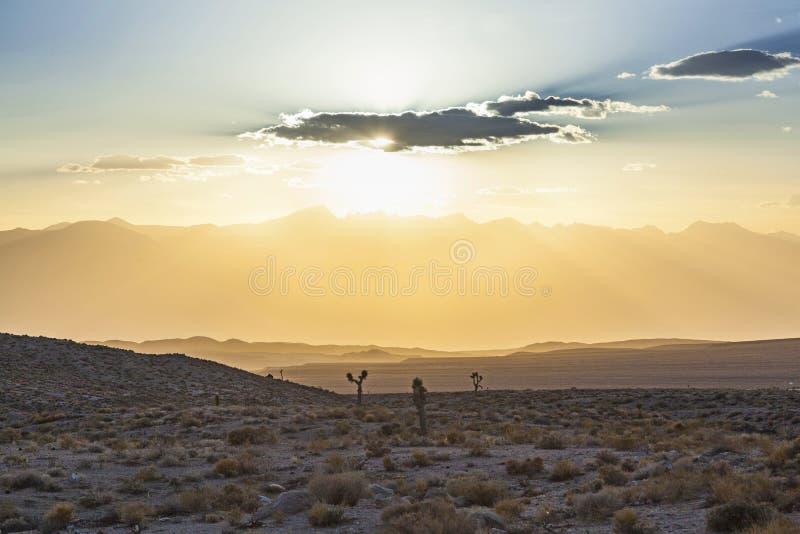 Belle yucche nel tramonto immagine stock libera da diritti