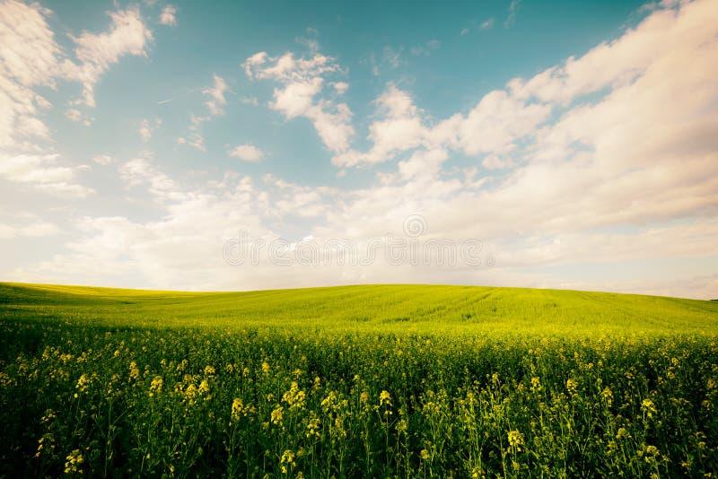 Belle zone d'été image stock