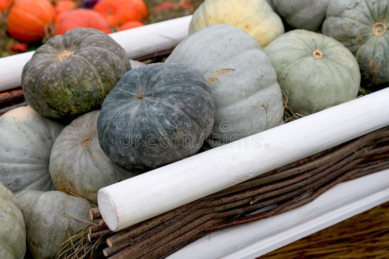 Belle zucche mature in un carrello Festival del raccolto Coltivatori collettivi in autunno raccolgono favoloso fondo autunnale co fotografia stock