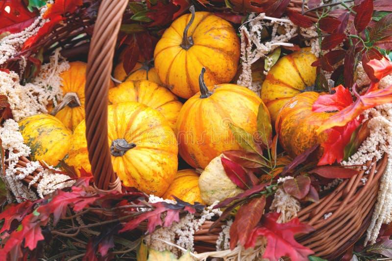 Belle zucche mature in un cestino Festival del raccolto Coltivatori collettivi in autunno raccolgono favoloso fondo autunnale con immagini stock