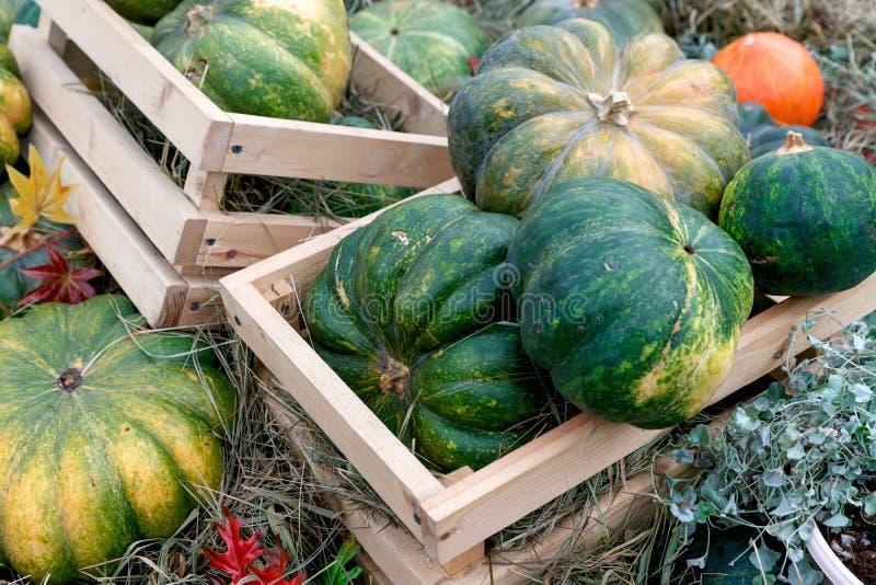 Belle zucche mature in una scatola Festival del raccolto Coltivatori collettivi in autunno raccolgono favoloso fondo autunnale co fotografia stock