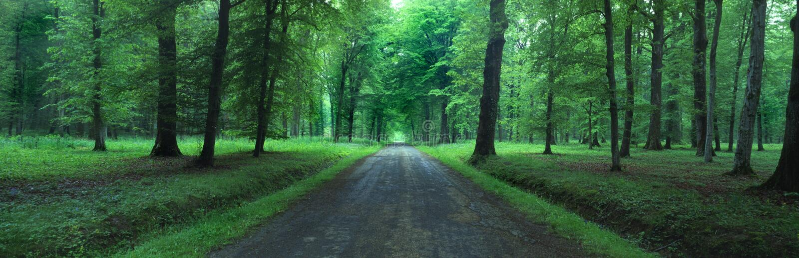 Belleau Wood, France royalty free stock images