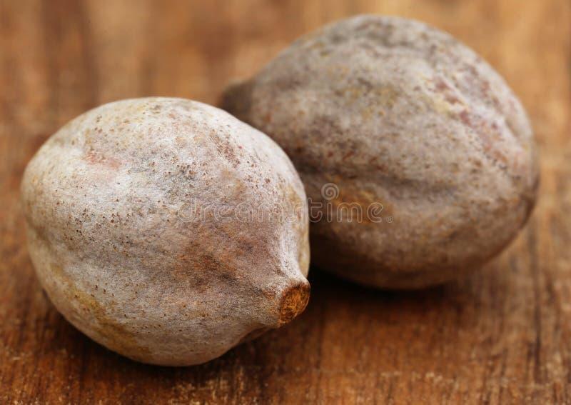 Bellericais de Terminalia ou fruits médicinaux de Bahera photographie stock