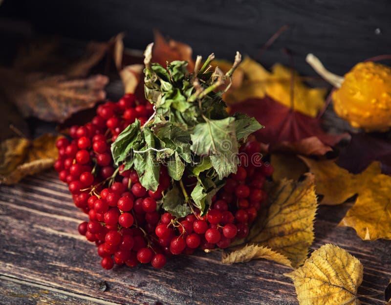Belles baies de Viburnum en automne image stock