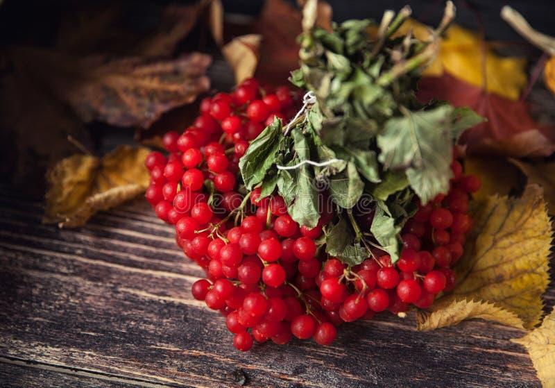 Belles baies de Viburnum en automne photographie stock