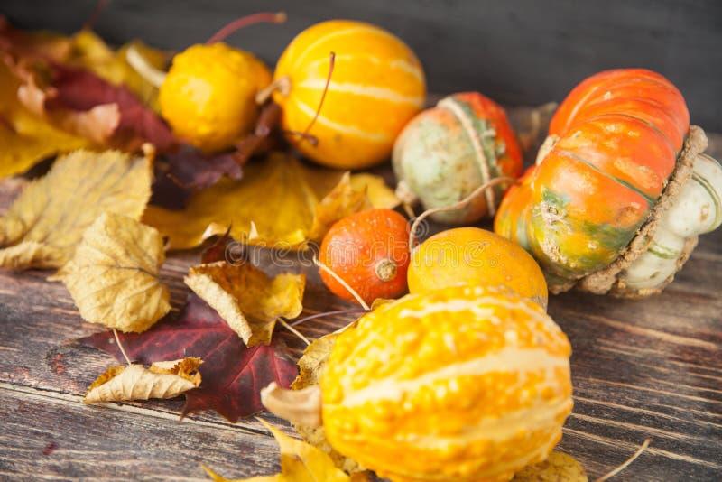 Belles baies de Viburnum en automne photo stock