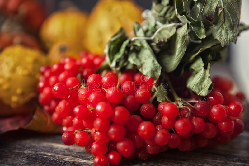 Belles baies de Viburnum en automne photographie stock libre de droits