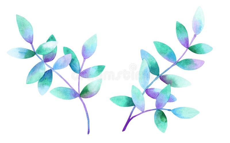 Belles branches avec les feuilles bleues pourpres vertes Illustration tir?e par la main d'aquarelle D'isolement sur le fond blanc illustration stock