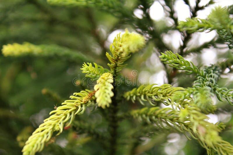 Belles branches d'arbre photo stock