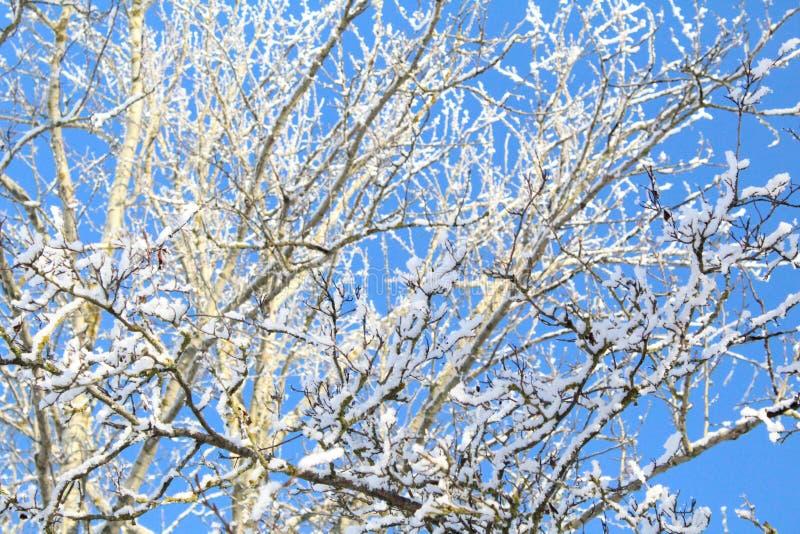 Belles branches d'arbre couvertes de gelée sur le fond de ciel bleu photo libre de droits