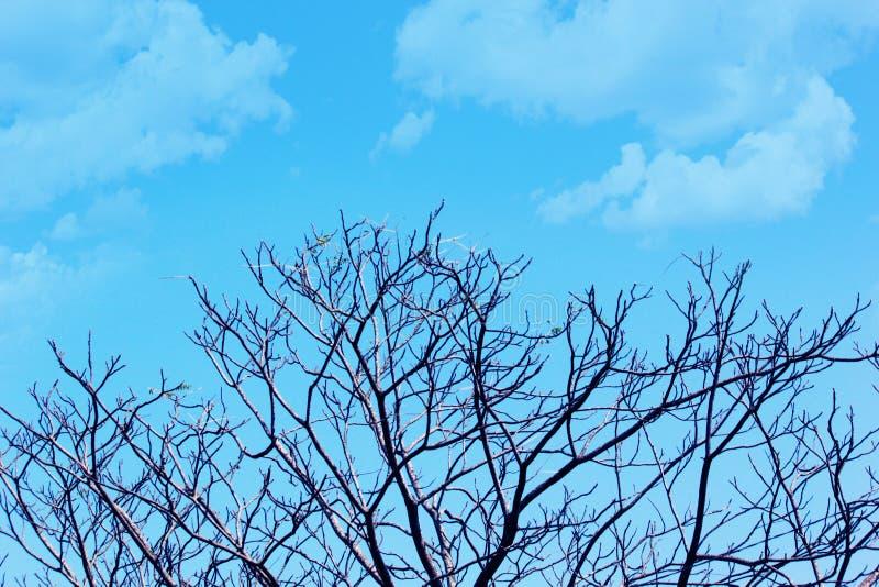 Belles branches d'arbre sans feuille au printemps sur le fond bleu de ciel nuageux photo stock