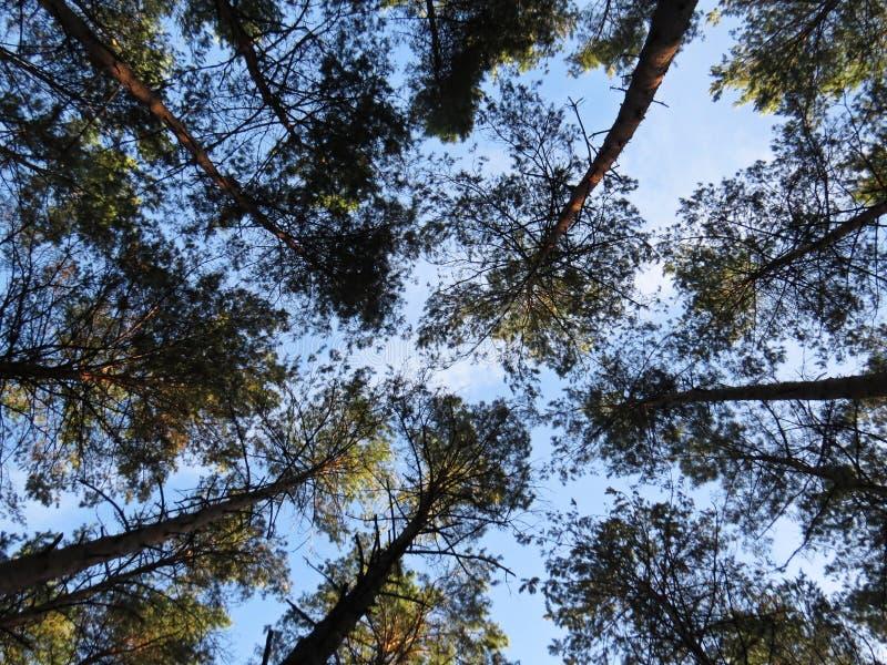 Belles branches de Sunny Sky Seen Through Tree avec des feuilles photos libres de droits