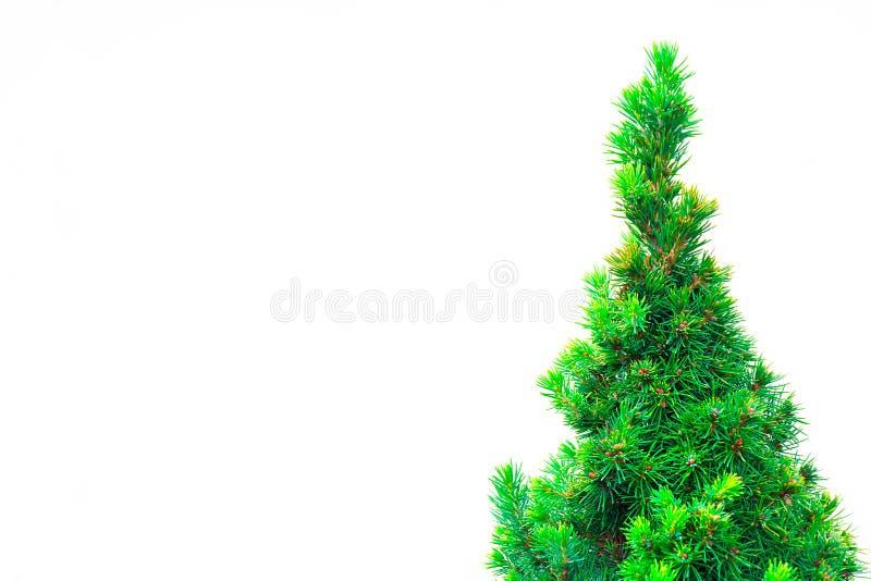 Belles branches impeccables vertes en épi comme fond image libre de droits