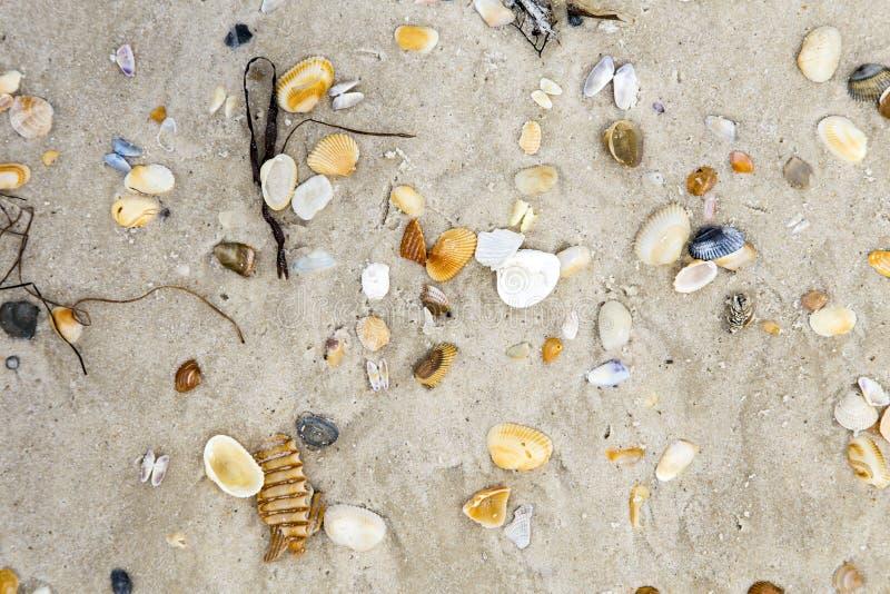 Belles coquilles à la plage sablonneuse photos libres de droits