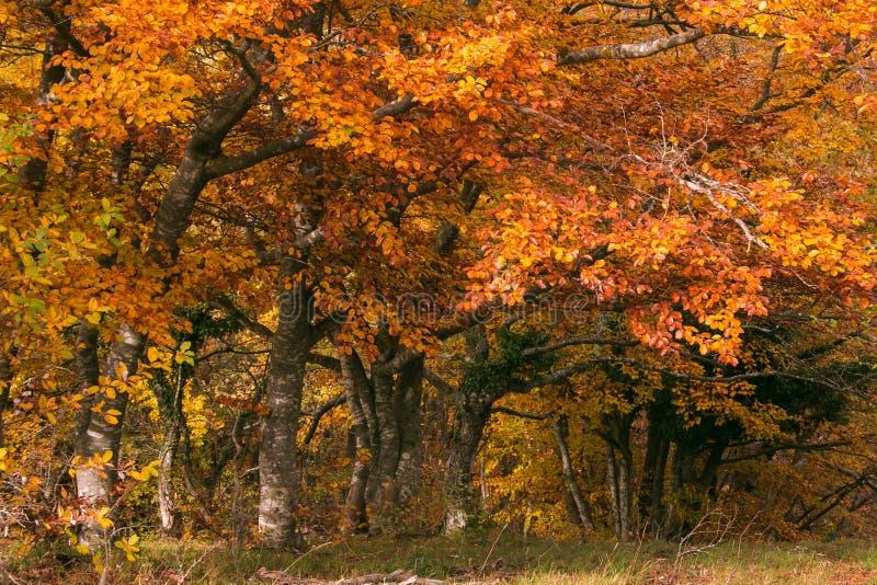 Belles couleurs automnales dans la réserve naturelle de Canfaito, Marche, Italie images stock