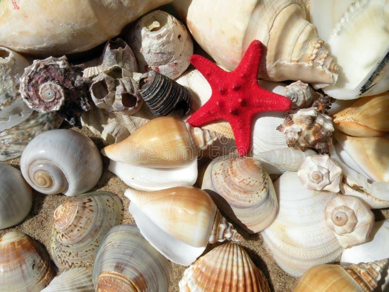 Belles différentes coquilles sur le sable photographie stock libre de droits