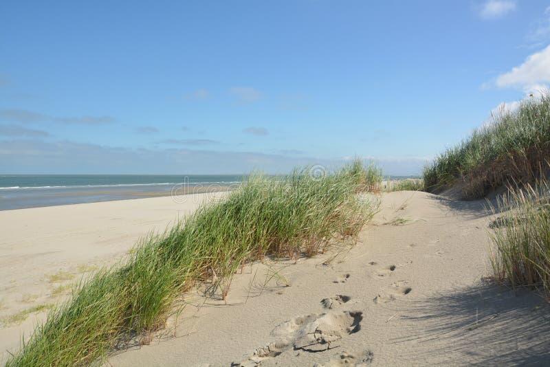 Download Belles dunes de sable image stock. Image du bleu, herbe - 77151001