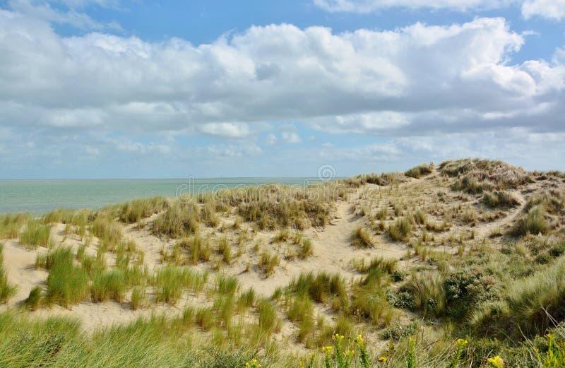 Download Belles dunes de sable photo stock. Image du plage, sable - 77153298