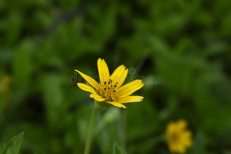Belles et avec du charme photos du paysage de fleur image libre de droits