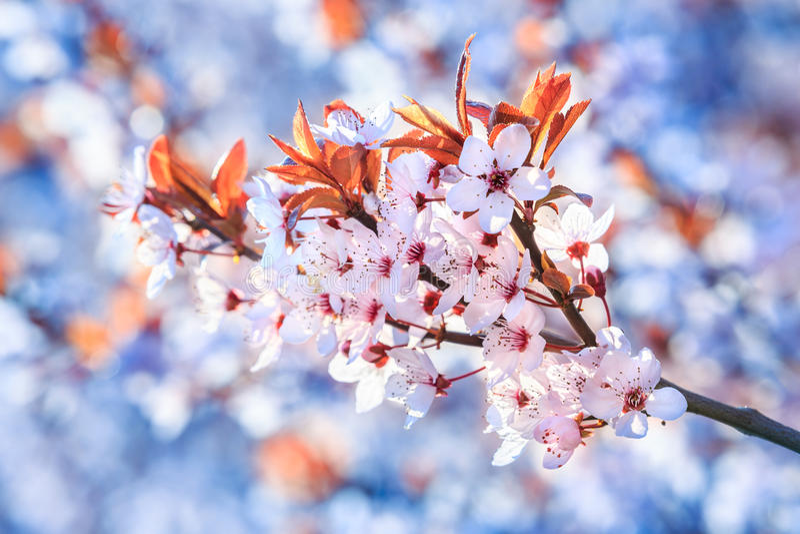 Belles et lumineuses fleurs d'été images libres de droits