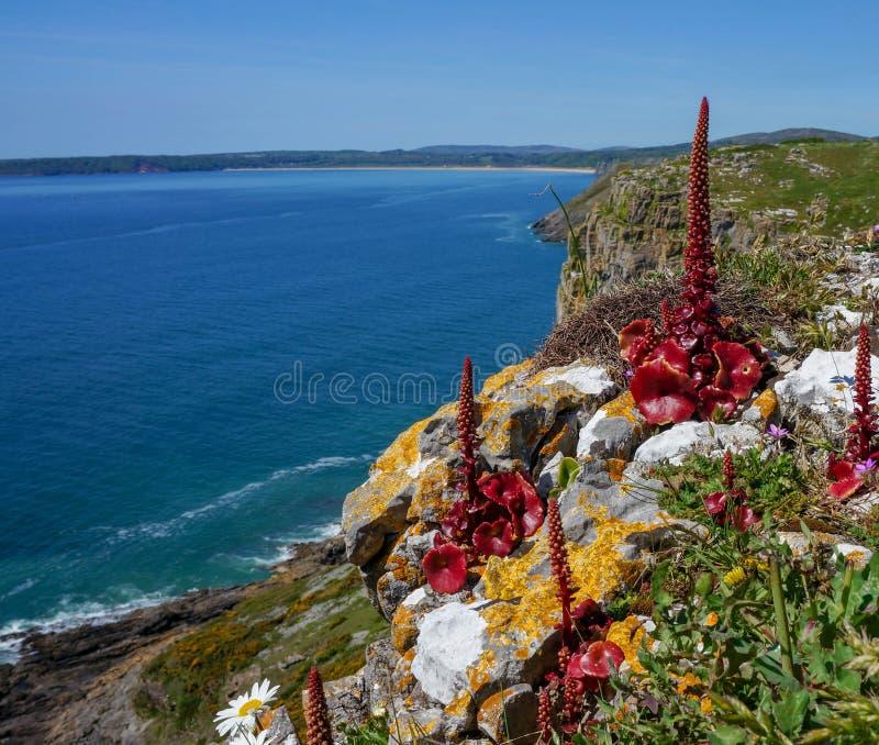 Belles falaises côtières avec les fleurs rouges image libre de droits