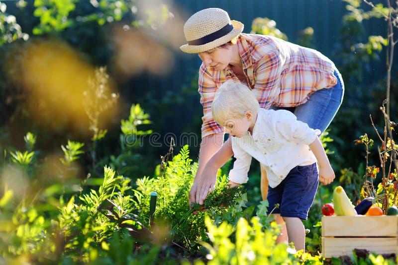 Belles femmes et son petit petit-fils adorable appréciant la récolte images stock