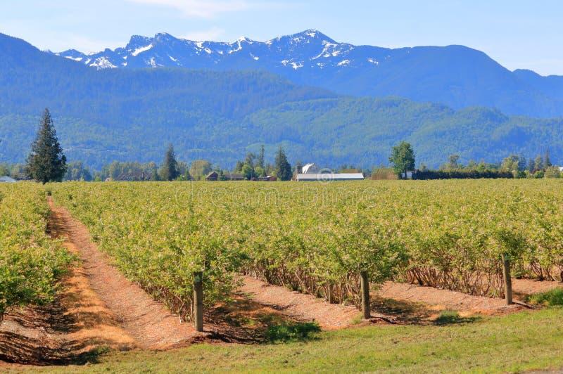 Belles ferme et montagnes de myrtille de vallée photographie stock libre de droits