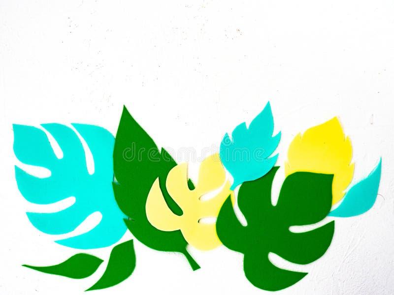 Belles feuilles découpées de monstera et d'autres usines Copiez l'espace photos libres de droits