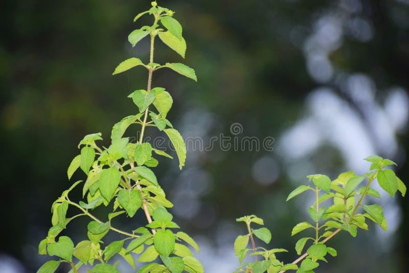 Belles feuilles d'arbre parmi des jungles photo libre de droits