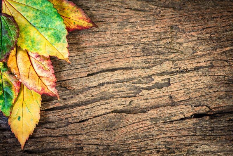 Belles feuilles d'automne tombées avec le fond en bois image libre de droits