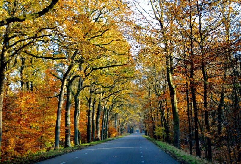 Belles feuilles de couleur dans l'automne photographie stock libre de droits