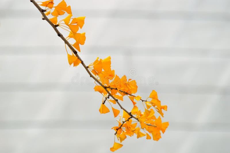 Belles feuilles jaunes en automne image libre de droits