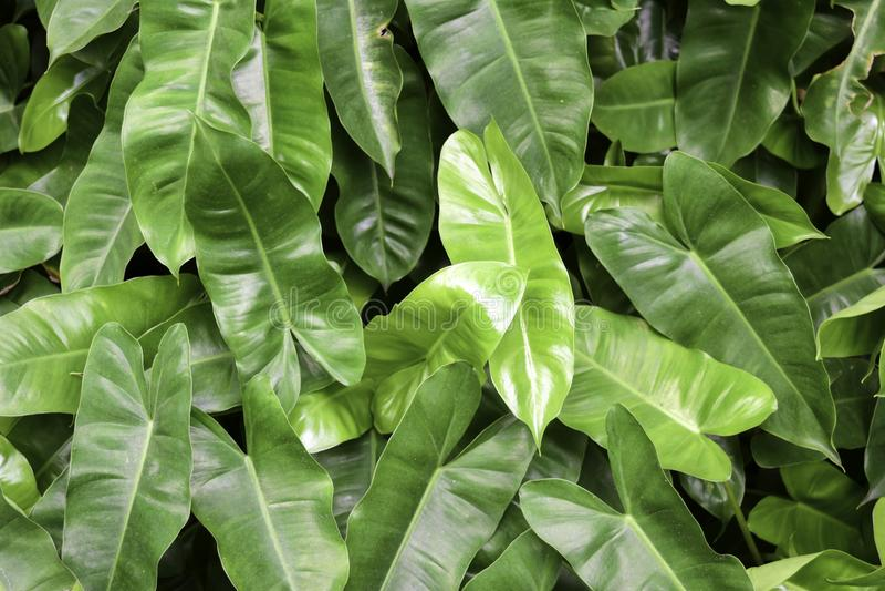 Belles feuilles pour le fond photos stock