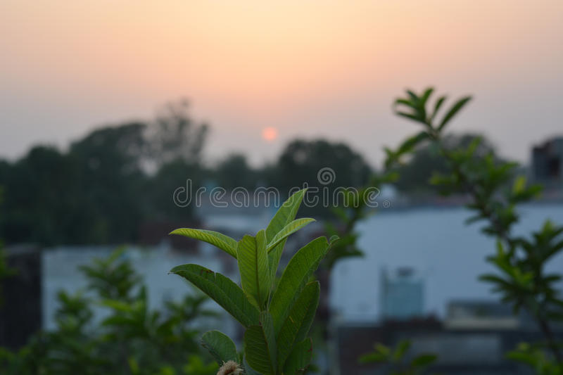 Belles feuilles sous le beau coucher du soleil photos stock