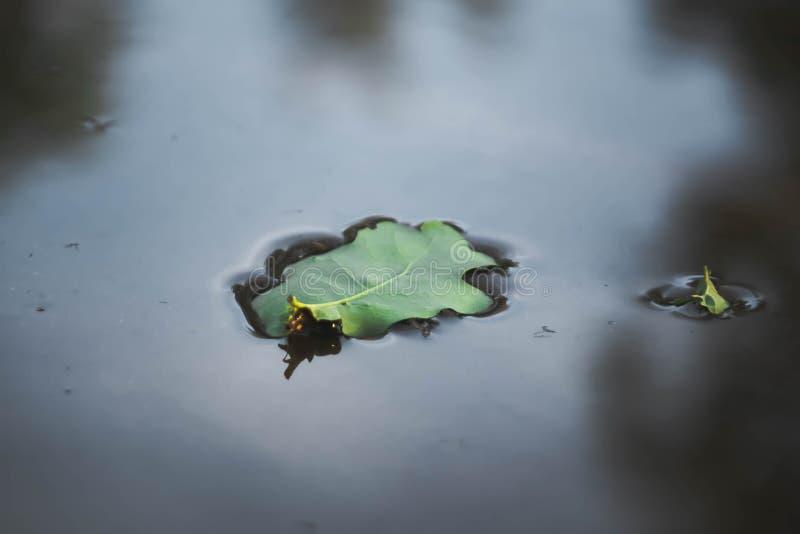 belles feuilles vertes dans l'eau du lac - arrière-plan naturel abstrait images stock