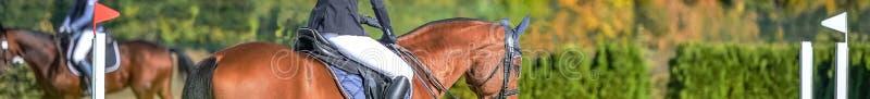 Belles filles sur des chevaux d'oseille dans l'exposition sautante, sports équestres illustration stock