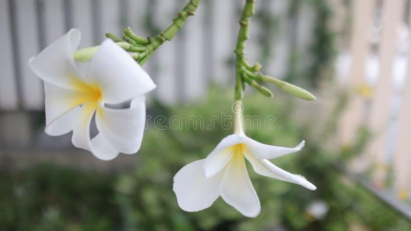 Belles fleur et nature images libres de droits
