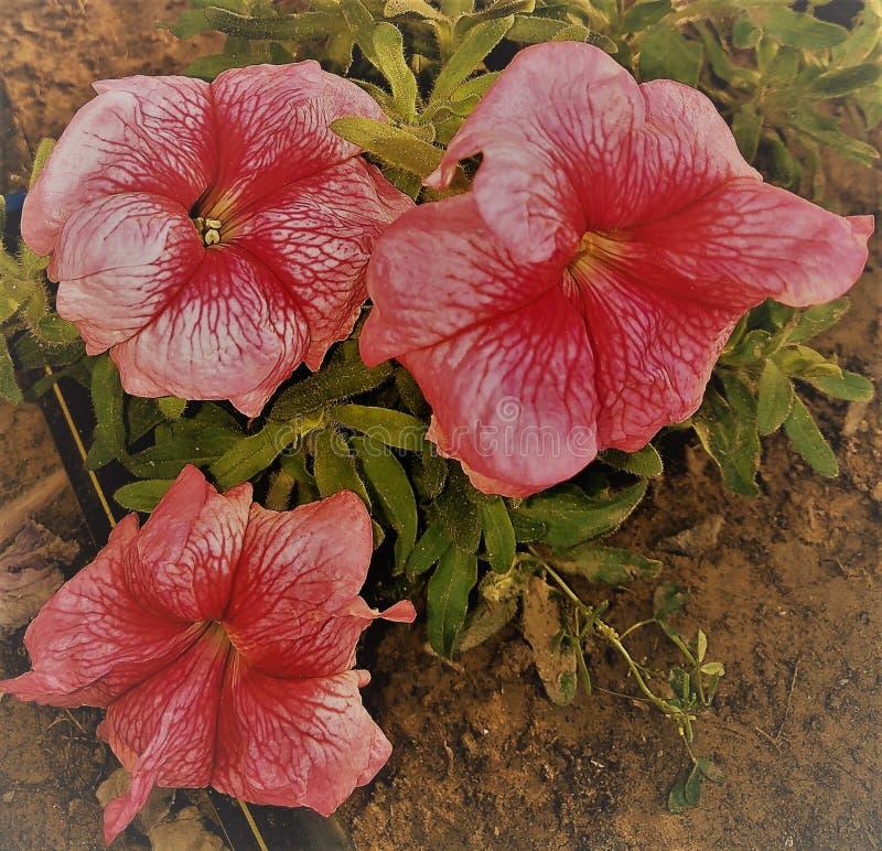 Belles fleurs photo stock