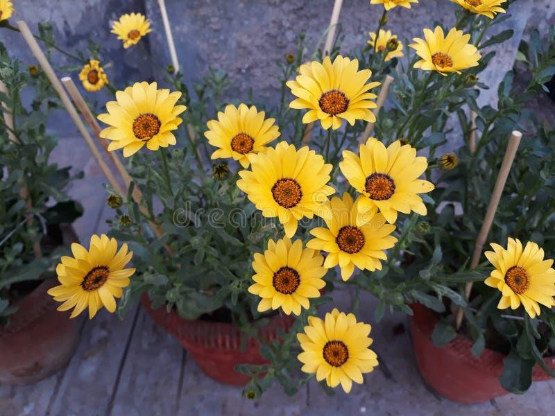 Belles fleurs photo libre de droits