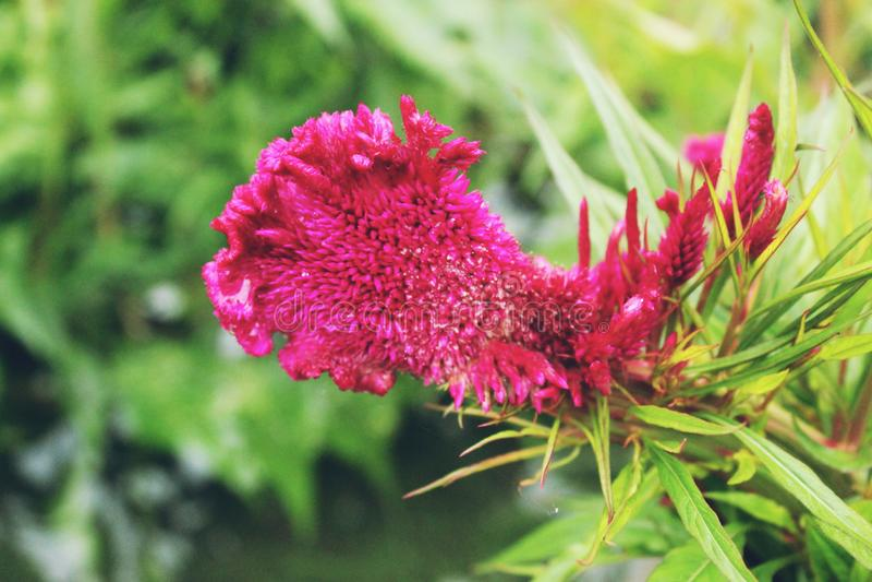 belles fleurs appropriées à la plantation dans le jardin images stock
